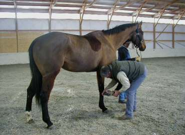 Dr. Woodall treating horse advanced lameness