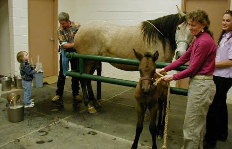 Foal horse reproductive services