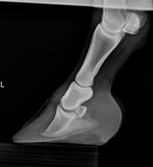 Equine Digital Radiography